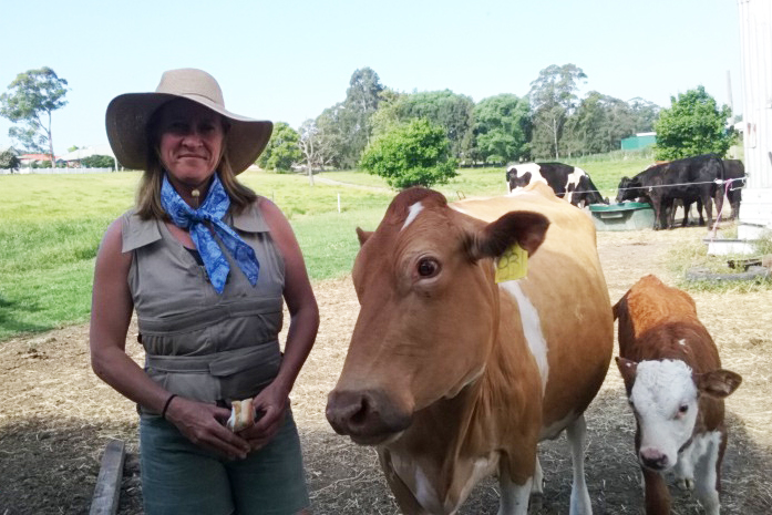 Woman wearing a Kool Max adjustable zipper front cooling vest and MS awareness fashion cooling scarf standing next to cows